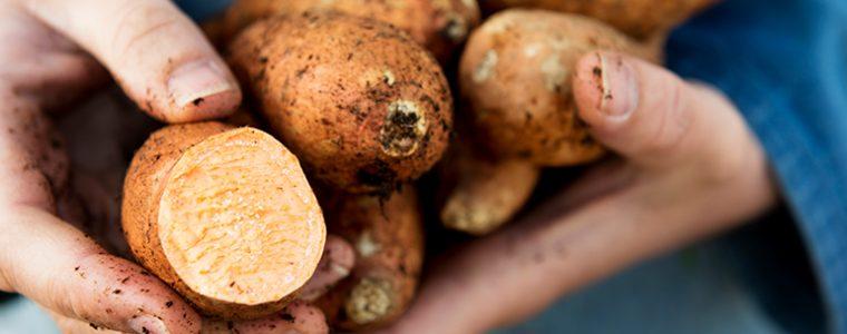 white or sweet potatoes 181077113