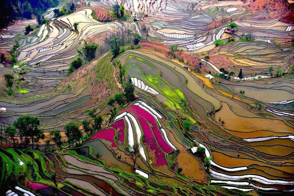rice terrace of yunnan china 1024x681