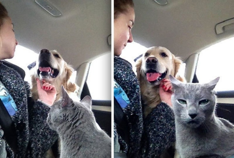 26 Cats Who Are So Overdramatic They Deserve An Oscar 1